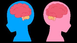 男性 女性 脳 イラスト